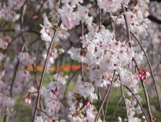 春の訪れ part2